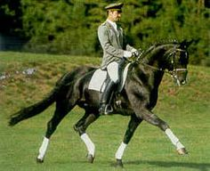 Rotspon (Rubenstein I X SPS Antalia) 1995 Hanoverian, 16.2hh. He scored 148.82 in dressage and 118.74 in jumping for a total of 145.67 points in the Adelheidsdorf Stallion Test. Standing at Landgestut Celle and available in the US by Superior Equine Sires.