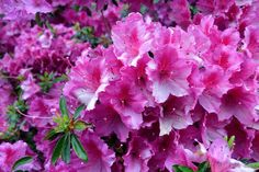 Jardin Botanico / Jardin Botánico / Botanic Garden [2011 - Porto / Oporto - Portugal] #fotografias #flor #flores #flower #flowers