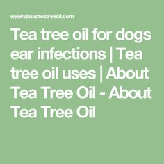 Tea tree oil for dogs ear infections | Tea tree oil uses | About Tea Tree Oil - About Tea Tree Oil