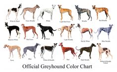 Ever wondered what colour your greyhound is. Take a look at this greyhound chart. what colour is you greyhound? Dachshund Funny, Corgi Funny, Greyhound Art, Italian Greyhound, Greyhound Dog Breed, Greyhound Tattoo, Tattoo Perro, Pembroke Welsh Corgi Puppies, Grey Hound Dog