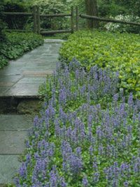 homogenous ground covers against stone path, so tranquil.