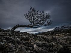 Windswept Rowan tree  |   Ord  |   Isle of Skye