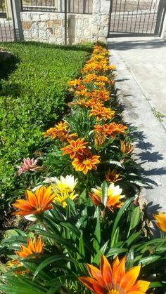 Kasandras House Landscape, Landscape Design, Garden Design, Outdoor Landscaping, Front Yard Landscaping, Side Garden, Beautiful Flowers Garden, Container Gardening, Planting Flowers