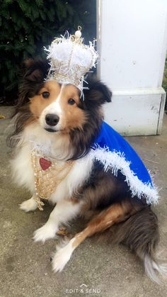 Happy Halloween from His Royal Highness Tobias!! ✨✨
