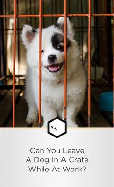Is it cruel or can puppy crate training be a solution for leaving a dog home alone? #puppytraining #dogtrainingnearme
