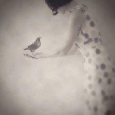 go, little birdie