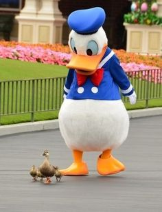 Donald Duck escorts real Ducks at Disneyland Disney Duck, Disney Parks, Disney Pixar, Tokyo Disney Resort, Disneyland Resort, Donald Duck Characters, Disney Characters, Duck And Ducklings, Duck Tales