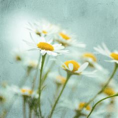 Looking for colours of spring, II by Gordana AM, via Flickr
