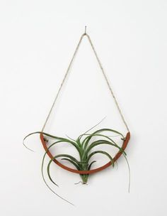What a creative way to display air plants. Cradle style. They're by Michael McDowell, the designer behind the upside down pod planter. The cradle was developed to showcase each air plant's individual beauty.
