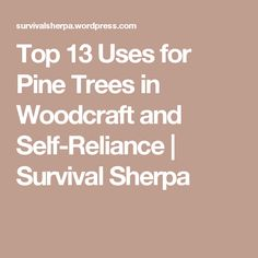 Top 13 Uses for Pine Trees in Woodcraft and Self-Reliance | Survival Sherpa