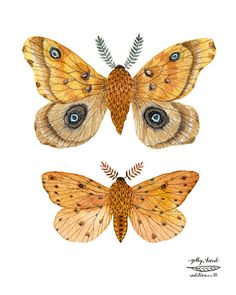 silk and sallow moth specimens giclee print by golly door GollyBard