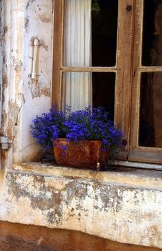 The Blue Lobelia in a window makes a striking contrast of vivid color against the light, warm tones of concrete.