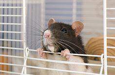 (Jessica Florence) Tags: bug rat