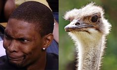 1000+ images about Animals That Look Like Celebrities on ...