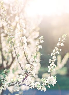 plum blossoms | nature light | jenhuangphoto.com | Orchard Wedding Photography and Inspiration