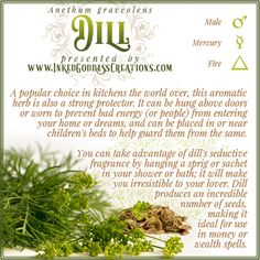 Dill was widely used across Europe, Asia, and Africa, even in ancient times. It has been found in the tomb of Amenhotep II, which dates to 1400 BCE, and was likely cultivated hundreds of years earlier. // #kitchenwitch #dill #prosperity #wealth #money #magick #protection #love #passion #dreams