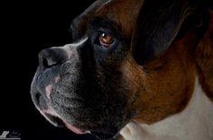 #doglover #dogphotography #dogphotos #fotografiamascotas