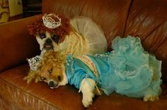 Beautiful Halloween Costumes for Pets