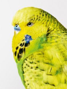 yes another beautiful bird