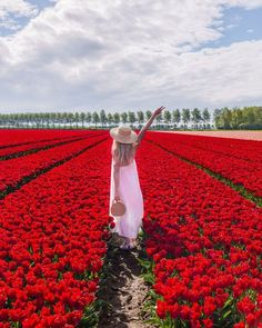 This fabulous red tulip field was in Goeree Overflakkee in the Netherlands! This is definitely one of the places I want to visit again next year! #tulip #tulips #netherlands #tulipfield #nederland #holland #eilandgoereeoverflakkee #spring Tulip Fields, Red Tulips, Life Is Beautiful, Netherlands, Holland, Photoshoot, Memories, Spring, Places