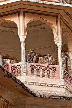 INDIA - Monkey Temple