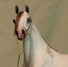 Arabian mare, Majeeda. Oh, btw, this is a scale model. Painted by Jen Kroll. Uncanny realism...
