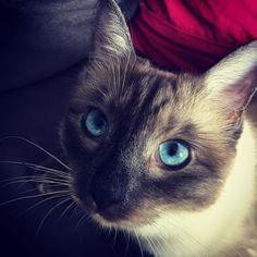 My kitty <3 http://ift.tt/2nphiv6
