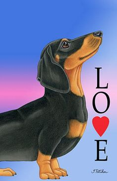 Puppy Care, Pet Puppy, Dog Cat, Dachshund Art, Daschund, Dachshund Puppies, Dog Cuddles, Dog Poses, Happy Puppy