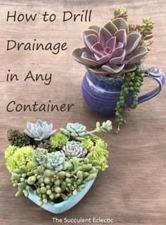 in Containers Without Drainage Drill Your Own Learn to drill drainage in ceramic and concrete. Now anything can be a beautiful succulent container!Learn to drill drainage in ceramic and concrete. Now anything can be a beautiful succulent container! Growing Succulents, Succulents In Containers, Container Plants, Cacti And Succulents, Growing Plants, Planting Succulents, Container Gardening, Gardening Tips, Planting Flowers