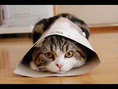 Meet Maru, arguably the most famous cat on the internet. His videos have over 50 million views. Cute and hilarious :-)