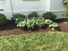 "Simple plantings can really make a ""statement"" can't they?!  #NortonCommons #Louisville #NewHomes #RealtorLouisville #RealEstateLouisville #MichaelThackerRealtor #LouisvilleHomesforSale #KentuckySelectProperties #Homearama2016 #ProspectKY #BuildingIndustriesAssociationofLouisville #BIA #Realtor #RealEstate #Kentucky #KentukySelectProperties #luxuryhomesLouisville #MLSSearch #landscape #floral"