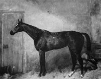 Lady Golightly a bay racehorse in a stable by Harry Hall