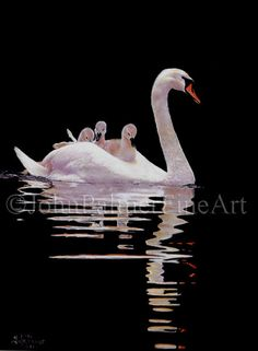 Hey, I found this really awesome Etsy listing at https://www.etsy.com/listing/169224684/swan-painting-swan-picture-swan-print