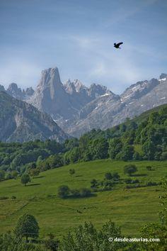 Naranjo de Bulnes o Picu Urriellu. Rutas senderismo Picos de Europa [Más info] http://www.desdeasturias.com/picos-de-europa/