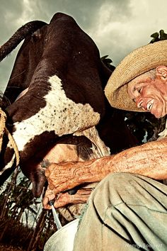Photograph Cuban farmer milking his cow by Henny Boogert on 500px
