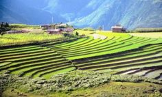Bhutan Aims to Be First Country With 100% Organic Agriculture