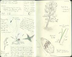 Pine tree & Hummingbird