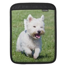>>>Coupon Code          West Highland White Terrier, westie cute photo Sleeve For iPads           West Highland White Terrier, westie cute photo Sleeve For iPads We have the best promotion for you and if you are interested in the related item or need more information reviews from the x custome...Cleck Hot Deals >>> http://www.zazzle.com/west_highland_white_terrier_westie_cute_photo_ipad_sleeve-205042528992011550?rf=238627982471231924&zbar=1&tc=terrest