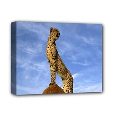 """Cheetah++Botswana+look+forward+to+love+Deluxe+Canvas+14""""+x+11""""+(Stretched)"""