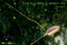 Try to be a rainbow in someone's cloud - Maya Angelou Image copyright of Eimear Moran Maya Angelou, Photo Editor, Gardens, Rainbow, Clouds, Inspirational, Image, Design, Rain Bow
