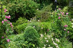 Part of our Upper Garden Terrace, looking towards our neighbour's garden by Rosarian49, via Flickr