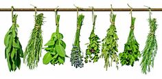 Herbs create the famous aromas we all love about Italian food