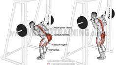 Smith machine bent-knee good morning exercise