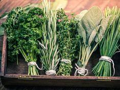 Jak zbierać zioła