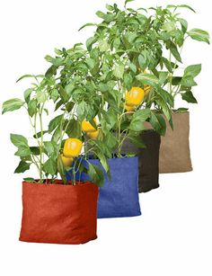 Colorful Pepper Grow Bag. Grow peppers (or other vegetables) in any sunny spot.