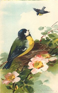 Bird Art by Catherine Klein: yellow- breasted bluetit on dog rose blossoms