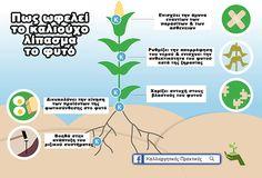 Πως ωφελεί το καλιούχο λίπασμα το φυτό