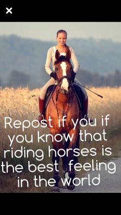 Repost if you think horses are the best animal ever