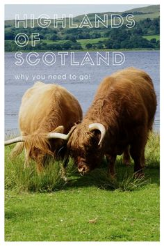 Highlands of Scotland. 15 reasons why you need to go to the #Highlands of #Scotland ! One of the least populated areas in #Europe but easily one of the most beautiful! Check it out!