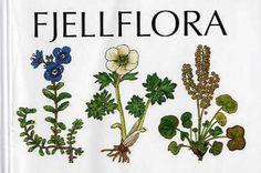 Fjellflora (BOK)